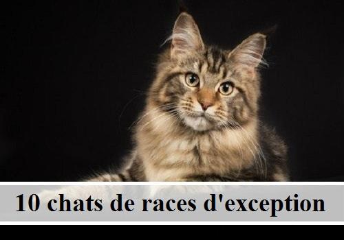 10 Chats De Rac... Chats