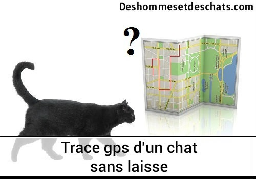 trace gps d 39 un chat sans laisse des hommes et des chats. Black Bedroom Furniture Sets. Home Design Ideas