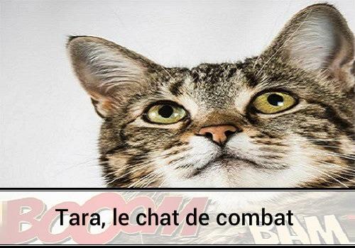 Tara le chat de combat des hommes et des chats - Images de chats rigolos ...