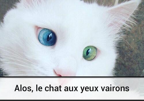 Alos le chat aux yeux vairons des hommes et des chats - Comment empecher un chat de gratter a la porte ...