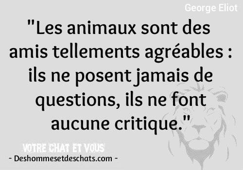 Citation D Amour Animaux Magnifique Citation Phrase