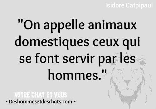 Drole Photos Adage Humour Du Jour Jolie Phrase Citation