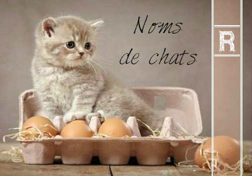 lettre chat 2016 Index of /wp content/uploads/2016/08 lettre chat 2016