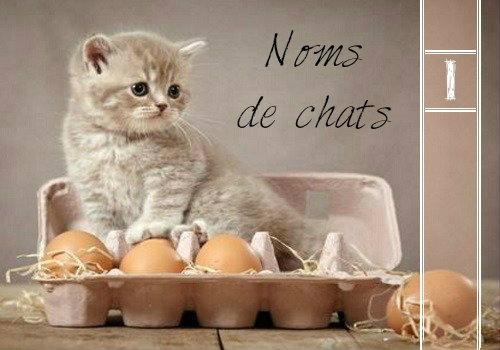 Nom De Chat Prenom Chaton Male Non Original Pour Chat Liste