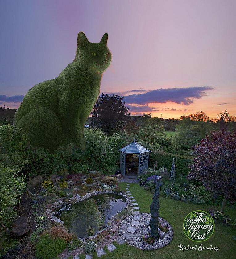 Photo de chat des hommes et des chatons chat rigolo des - Photo de chaton rigolo ...