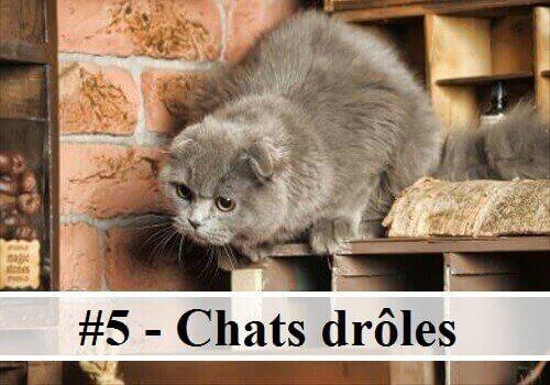 5 10 photos de chats dr les des hommes et des chats - Image des mignon ...