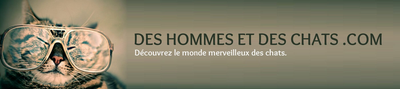 Des hommes et des chats