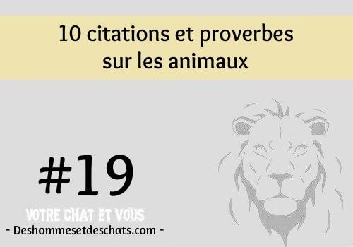 Jolie Phrase Courte Les Plus Belles Phrases Photo Proverbe