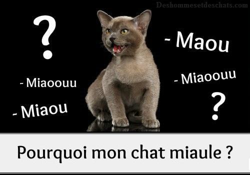 Le miaulement du chat pourquoi mon chat miaule des - Comment empecher un chat de gratter a la porte ...
